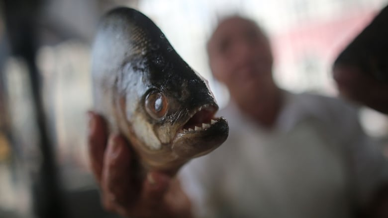 Barking piranhas and screeching catfish are the sounds of the Amazon