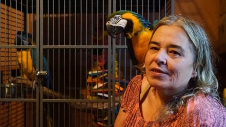 Parrot shelter's future up in the air   CBC