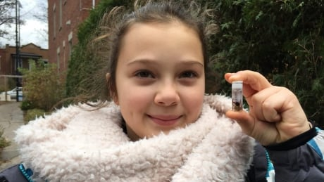 10 year old montrealer finds spider never before seen in quebec
