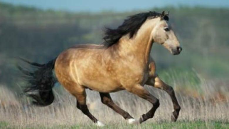 trigger happy hunter killed beloved buckskin horse owner believes