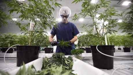 Canopy Growth shares stumble 8% after company posts quarterly loss