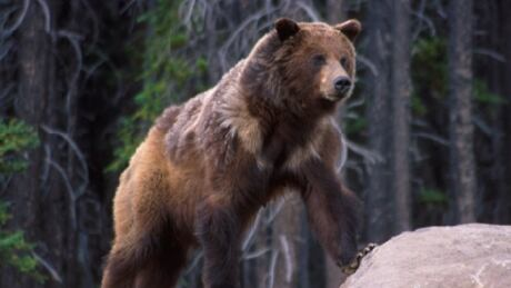 Feds, B.C. expand protected habitat for 40 species at risk in B.C. s Darkwoods