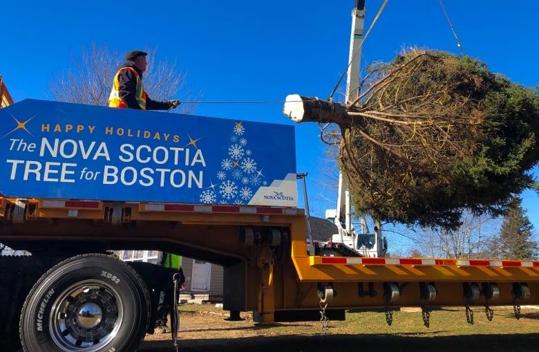 Nova Scotia Still Sends A Huge Christmas Tree To Boston