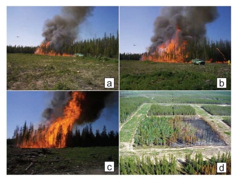 'It blows my mind': How B.C. destroys a key natural wildfire defence every year