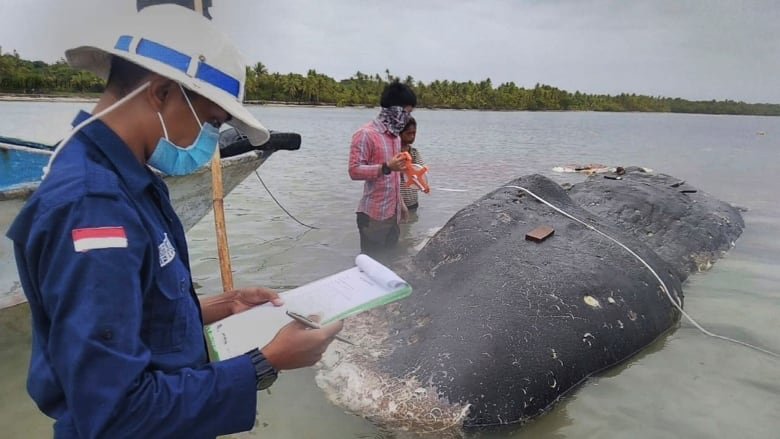 b3476bc35f27 Dead whale found with 115 plastic cups