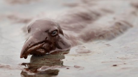 Gulf Oil Spill - Gallery