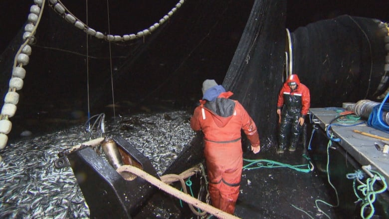 B.C. herring roe fishery ends for another season amid ongoing controversy