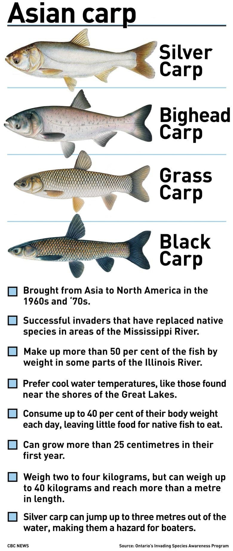 Great Lakes mayors call for action, alternatives to dealing with invasive Asian carp