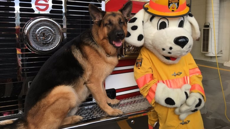 Diesel the dog — already a TV star — can now add honorary St