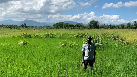 To feed the world amid climate change, we need a better way to grow rice