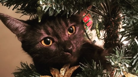 So this is Christmas — with a cat