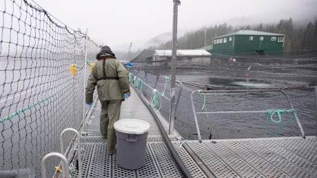 17 fish farms to be phased out under new agreement between B.C. government, First Nations
