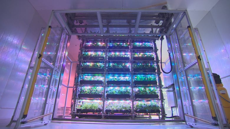 Photo: LED lights are used to grown leafy greens inside a Toronto warehouse