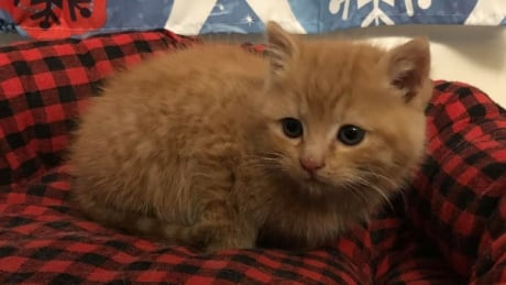Couple discovers kitten under hood of car while driving
