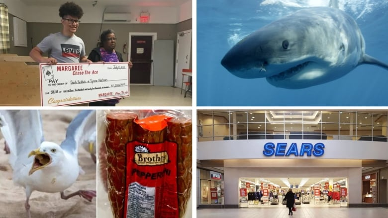 Looking back at the top 10 Nova Scotia stories of 2018 | CBC News