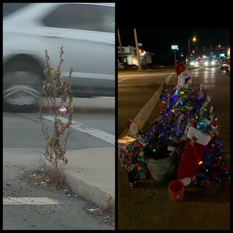 Toledo Christmas Weed.O Christmas Weed Festive Sidewalk Plant Brings Holiday