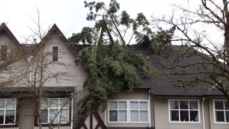 B.C. windstorm cost insurers $37 million for loss to homes, businesses, vehicles