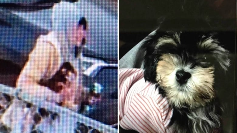 Who stole Milo? Edmonton police ask for help finding puppy thief