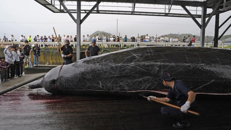 Australia disappointed by Japan's return to whaling