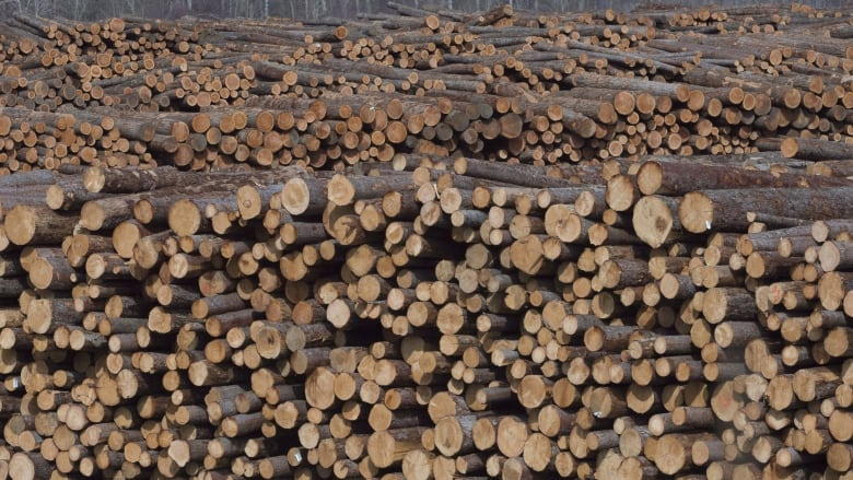 Tolko closing 1 B C  sawmill, cutting shifts at another