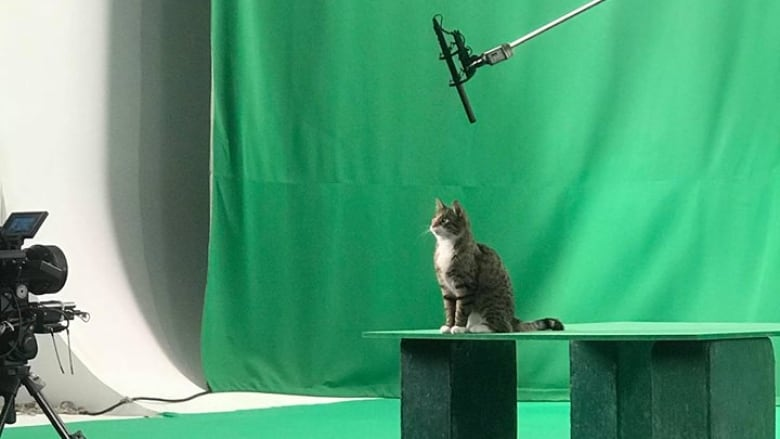 Rescue Cat Making Big Screen Debut