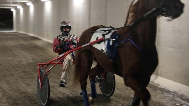 Western Fair Horse Races