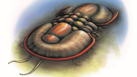 Fossils discovered at B.C.'s Burgess Shale add branch to tree of life