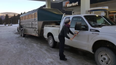 Biologists take action to save dwindling caribou population