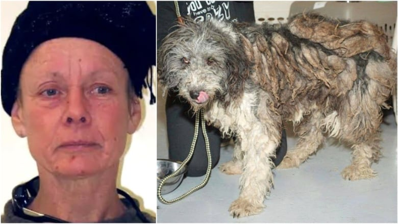 Alberta woman facing animal abuse charges found fit to stand trial
