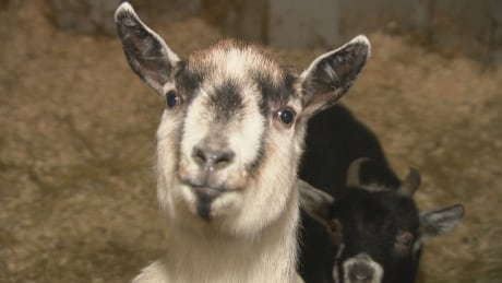 Kemptville animal sanctuary appeals for help heating barns