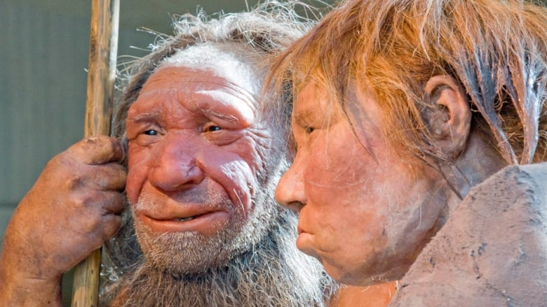 Less brawn, more brains: New exhibition aims to dispel Neanderthal myths