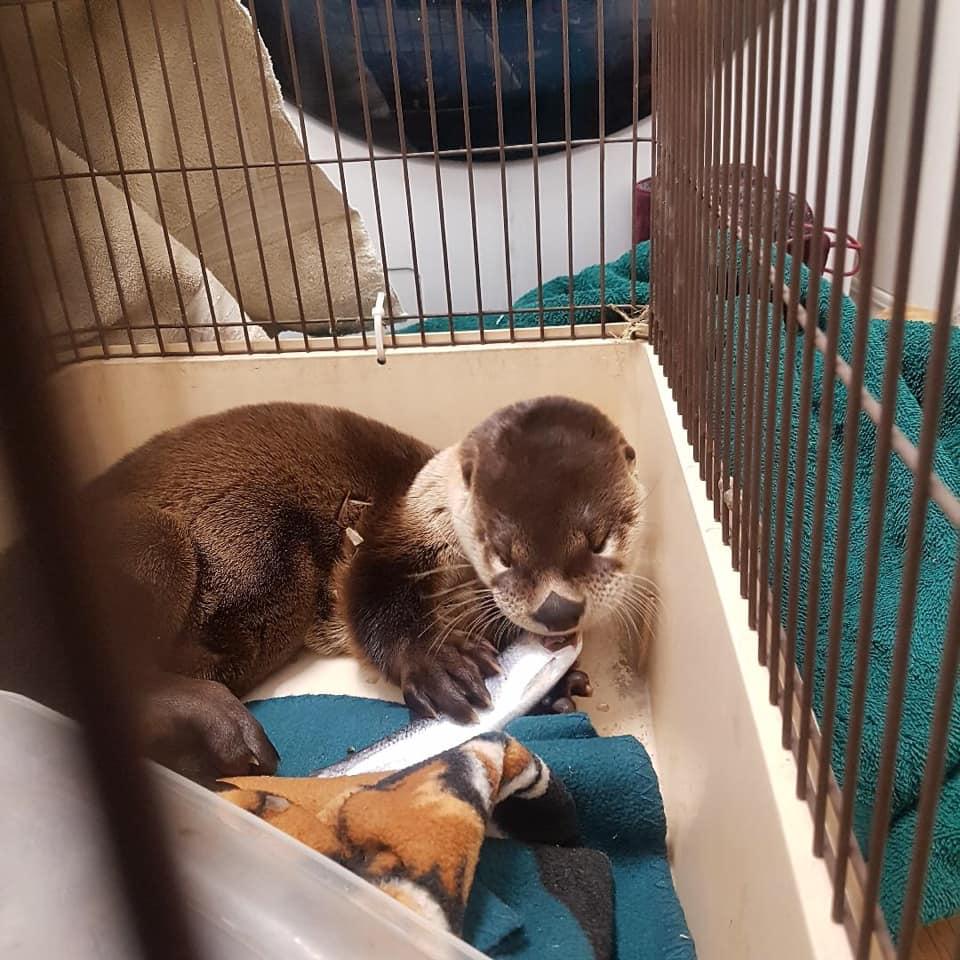 Otter found living under garbage bin in downtown Winnipeg