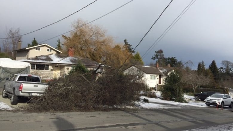 Major windstorm hits B.C.; more than 12,000 still without power