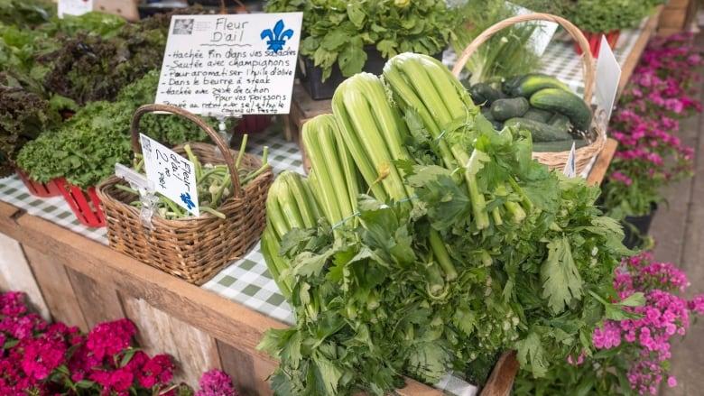 Celery juice trend fills Instagram feeds, sells drinks but dietitian