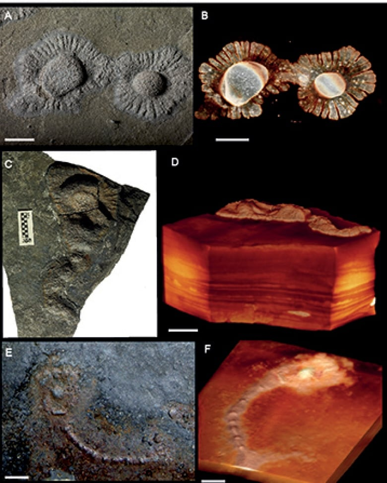 These slimy, hungry blobs may have been the Earth's first creepy crawlies