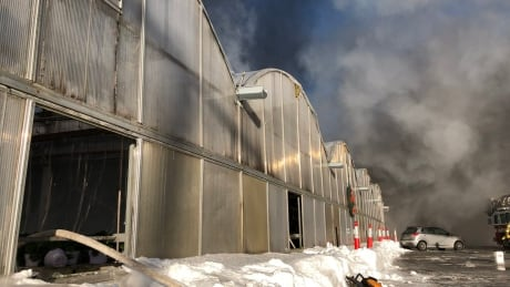Section of Laval greenhouse complex destroyed in fire