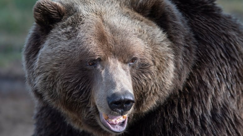 2 hunters fined ,000 for killing grizzly at Alberta hunting camp, threatening witness with axe
