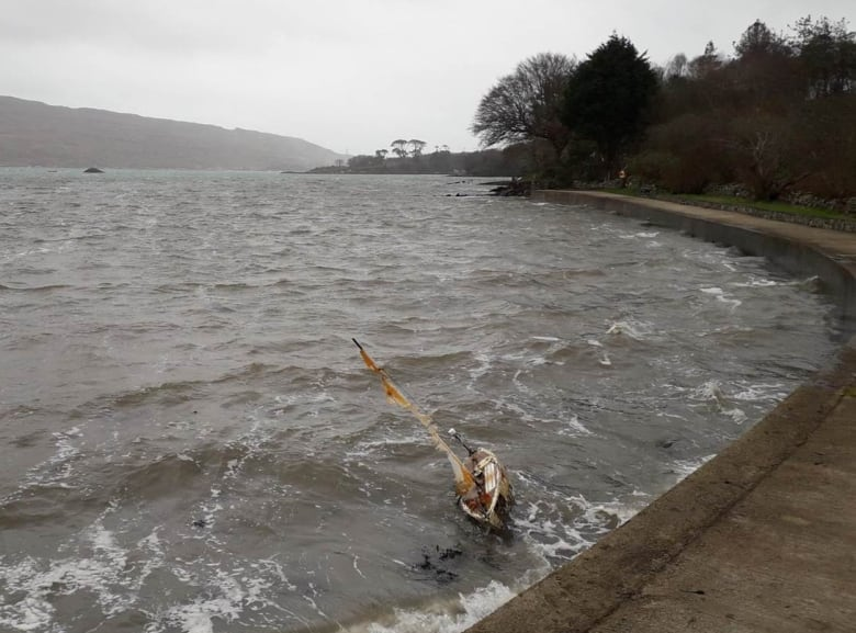 SeaLeon washed ashore in Ireland. Photo from CBC/Sheila O'Regan