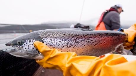 Fish Health Audit 20181101