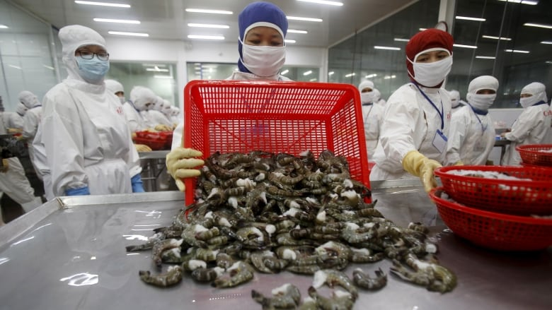 Shrimp containing antibiotic-resistant bacteria found in Canadian grocery stores