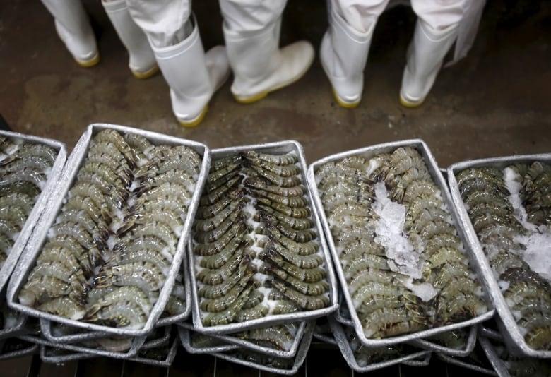 Shrimp containing antibiotic-resistant bacteria found in Canadian
