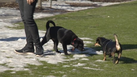 City of Greater Sudbury looking into guidelines and locations for off-leash dog park