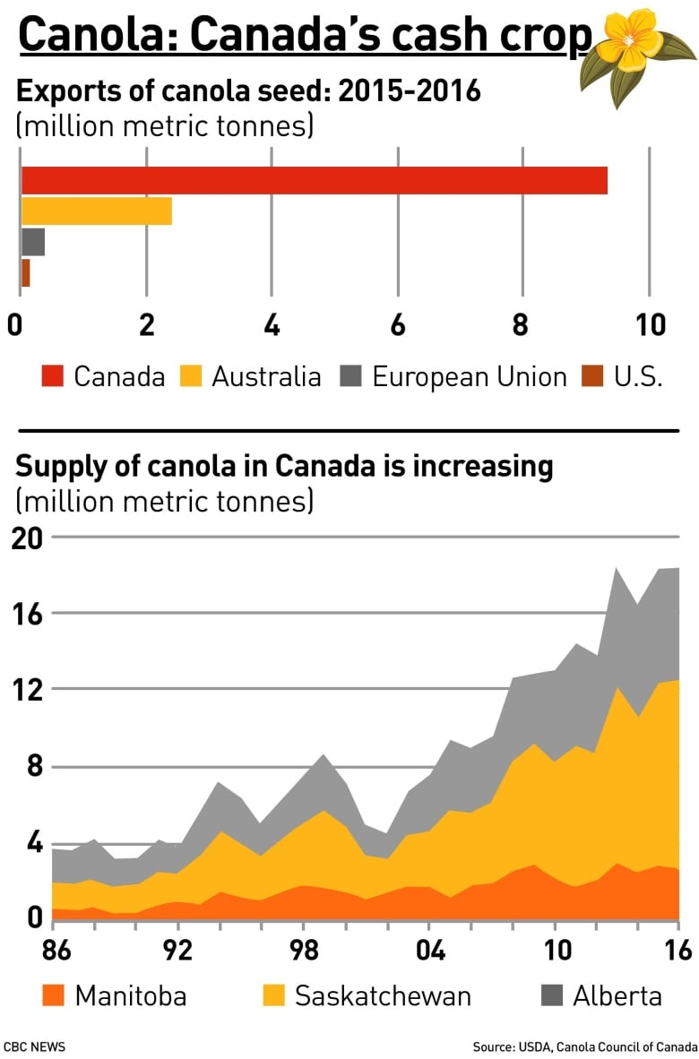 China has stopped buying Canadian canola seed | CBC News