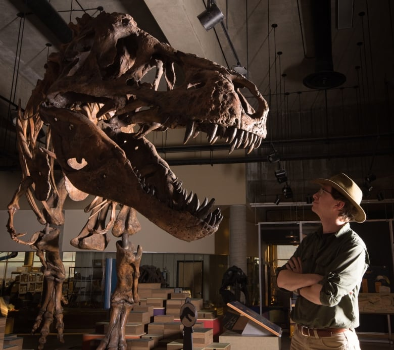 Sask  T-rex Scotty is officially biggest ever discovered