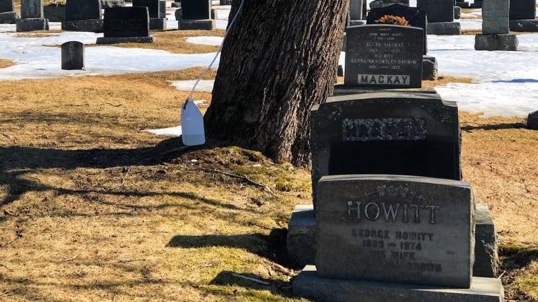 The strange case of Saint John's cemetery syrup