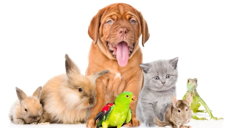 5 Ways Having A Pet Can Be Good For Your Health Cbc News