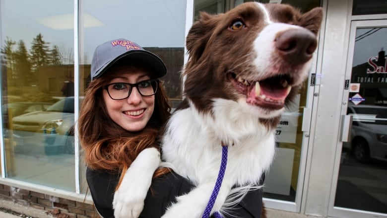 This Toronto-area border collie has mastered Connect Four