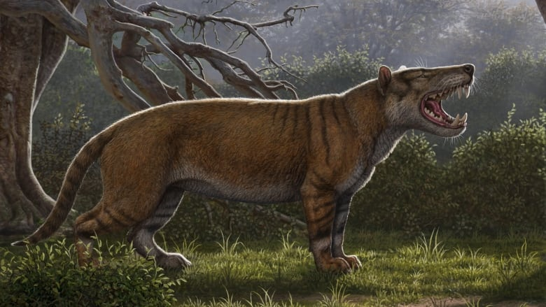 Simbakubwa kutokaafrika, a gigantic carnivore known from