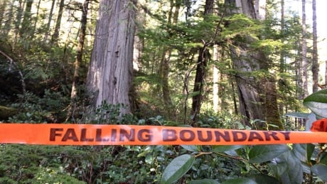 Falling boundary tape old growth BC Timber Sales April 2019