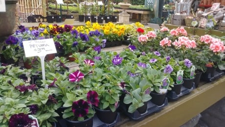 Top spring gardening mistakes to avoid this holiday weekend